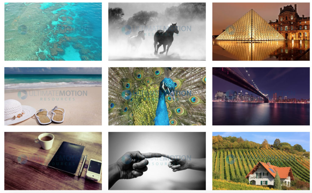 YMYL-themes-9 example images